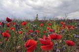 Fototapeta Nature - field flowers © Katarzyna