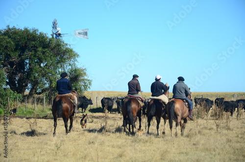 Ganado Angus en Bragado, buenos aires, Argentina