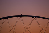 Watchful Lone Bird on top of Bridge, Tempe, Arizona, USA
