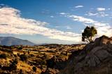 Arbol en la Sierra