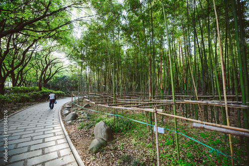 Fotobehang Shanghai Bamboo park, Shanghai, China
