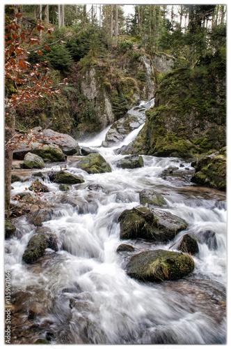 Rivière en forêt Poster