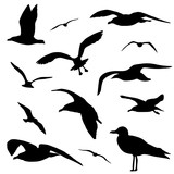 Seagull silhouette set isolated on white background vector - 135969003