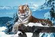 Tiger at the snow mountains laying at the wood