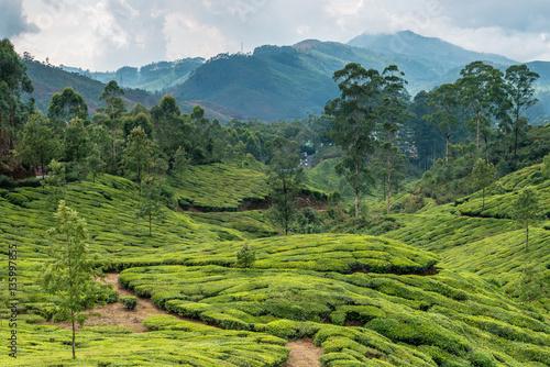 Foto op Canvas Koffie Tea plantations in state Kerala, India