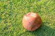 broken basketball ball on a grass lawn in a morning.