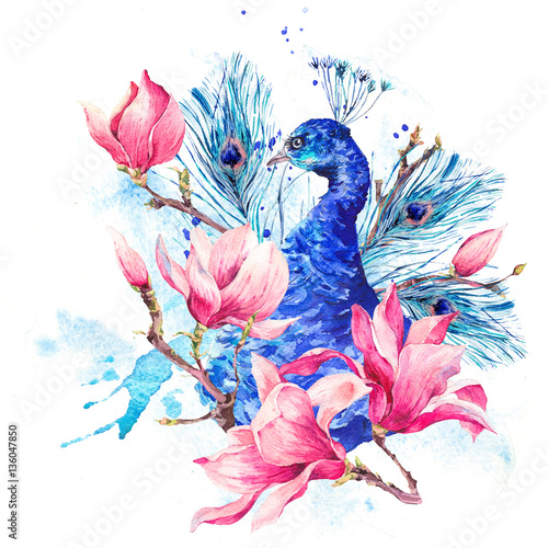 Watercolor Peacock with Flowers Magnolia - 136047850