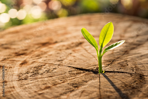 Poster New Life concept with seedling growing sprout (tree).business de