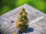 Dried cannabis bud (Congolese Strain) over wood texture - medica