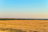 Flat landscape with a rye field and suburban houses on the horizon. Rural landscape. Belgorod region, Russia.