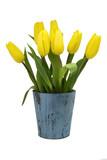 Gelbe Tulpen, Holz Vintage blau