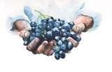 Fototapety Grapes in hands watercolor painting illustration isolated on white background