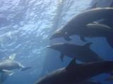 Delfines del Pacifico