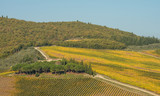 Scenic view on vineyards in Tuscany