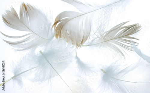 bird feather on a white background as a background for design - 136141034
