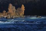 Autumn scene at the river Rhine