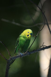 Colorful parrot sitting on tree branch, close-up