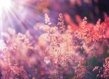 Autumn grass and wildflower background - 136182638