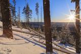 trees of winter mountain