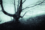 creepy tree in foggy forest