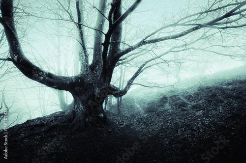 Aluminium Betoverde Bos creepy tree in foggy forest