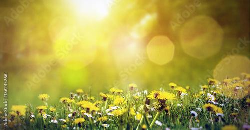 Wiosny łąka z dandelions i pszczołą w świetle słonecznym