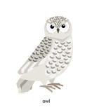 White polar owl - rather large bird of Arctic