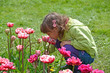 The little girl smells pink tulips in a spring garden