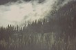 Foggy Wilderness Forest