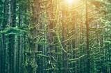 Mossy Northwest Forest