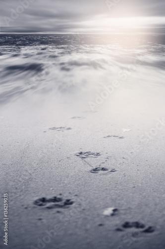 Dog footsteps in sand.color toned. Poster