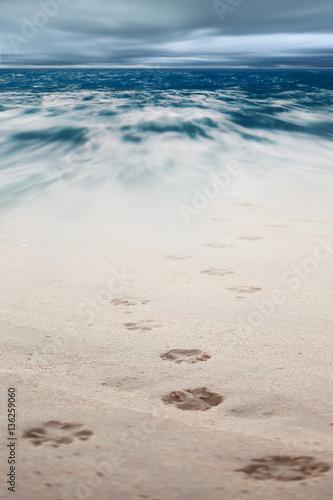 Dog footsteps in sand.color toned.