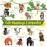 Cute Monkey and Primate Animals cartoon on white background with animal name.
