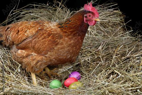 Staande foto Kip eggs Easter