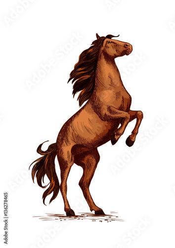 Rearing wild horse vector sketch symbol