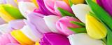 Tulips - 136281230
