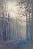English woodland on a foggy misty morning