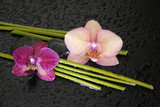Fototapety Bamboo and Orchid
