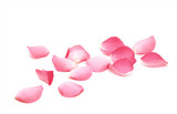 Petals of roses on a white background - 136300613