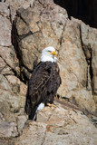 Eagle perched on rock