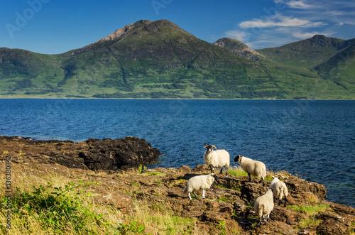 Five sheep Poster