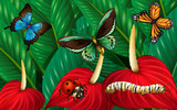 Butterflies and other insects in garden