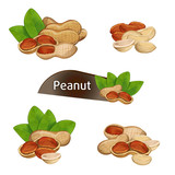 Peanut kernel in nutshell with green leaves set isolated on white background vector illustration. Organic food ingredient, traditional snack. Peanut nut seed whole and shelled, groundnut collection