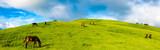 野生馬の草原