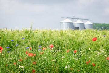 Nachhaltige Landwirtschaft - Blühstreifen an einem Getreidefeld