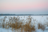Pink sky in winter at sunset with reeds in the foreground