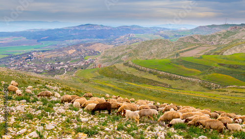 Fotobehang A flock of sheep in the mountains