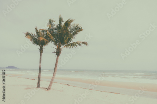 Couple coconut palm tree on beach - Vintage tone - 136451250