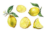 Fototapety Set with whole and slice fresh citrus fruit lemon with green leaves and flowers. Hand drawn watercolor painting on white background.