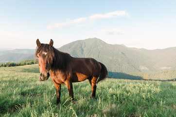 Brown horse in the mountains